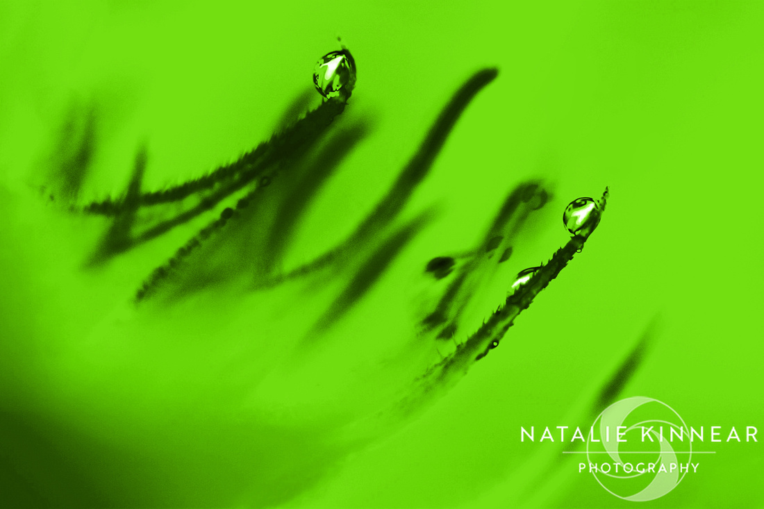 Water Droplets Abstract - Lime Green