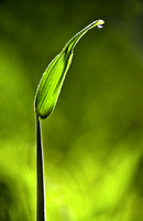 Sunlit Grass and Dew Drop