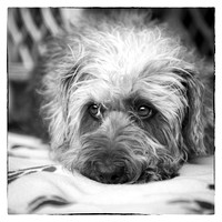 Cute Scruffy Pup in Black and White