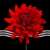 Red Dahlia Flower and Wavy Lines Triptych Canvas 2