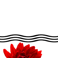 Red Dahlia Flower and Wavy Lines Triptych Canvas 1