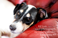 Pampered Pets Funny Dog Quotes - Jack Russell Terrier on the Sofa