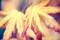 Japanese Maple Leaves with Texture Effect - Natalie Kinnear Photography - Print and Canvas Wall Art