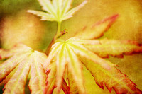 Japanese Maple Leaves Autumn Colors with Texture Effect - Natalie Kinnear Photography - Print and Canvas Wall Art