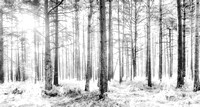 Mystical Forest Trees in Black and White - Natalie Kinnear Photography - Print and Canvas Wall Art