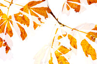 Autumn Leaves Abstract - Natalie Kinnear Photography