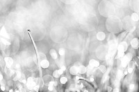 Natures Sparkle Dewdrops in Sunlit Grass Black and White - Natalie Kinnear Photography - Print and Canvas Wall Art