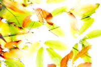 Leaves Splash Abstract 3 of 3 Natalie Kinnear Photography - Print and Canvas Wall Art
