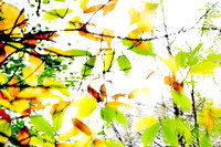 Leaves Splash Abstract 1 of 3 Natalie Kinnear Photography - Print and Canvas Wall Art