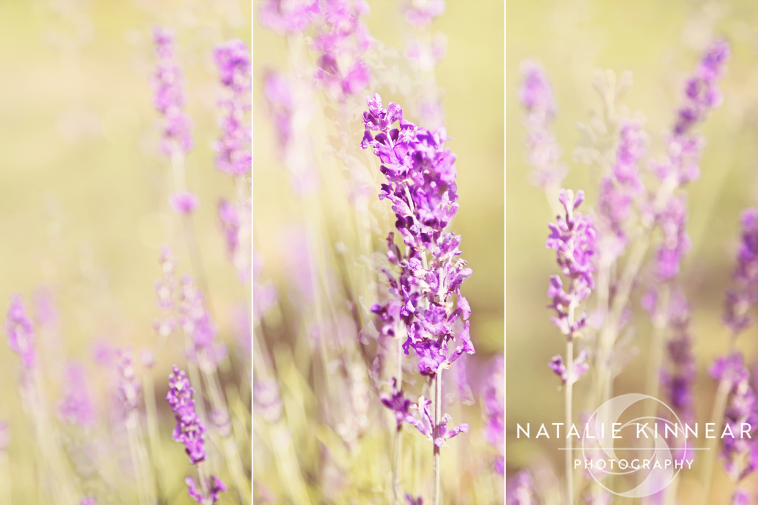 Summer Time Flowers Peaceful Moments - Natalie Kinnear Photography - Print and Canvas Wall Art