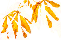 Autumn Leaves Abstract 2 - Natalie Kinnear Photography