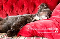 His Lordship Dog Snoozing and Humorous Text - Natalie Kinnear Photography - Print and Canvas Wall Art