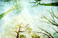 Trees Up High Abstract Photographic Art - Natalie Kinnear Photography - Print and Canvas Wall Art