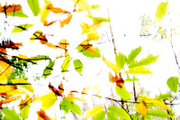 Leaves Splash Abstract 2 of 3 Natalie Kinnear Photography - Print and Canvas Wall Art